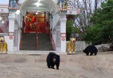 एक ऐसा देवी मंदिर जहां श्रद्धालुओं के साथ आरती में शामिल होने रोज आते हैं भालू, जानिए कहां है यह देवी स्थान