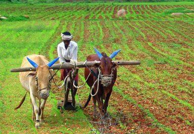 खुशखबरी: आज इन किसानों के बैंक खातों में 2 हजार रुपए भेजेंगे CM,15 लाख किसानों को मिलेंगे 1500 करोड़