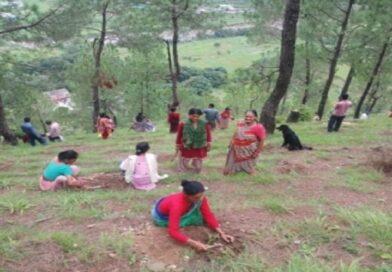 मध्यप्रदेश : हीरे की चाहत में बक्सवाहा जंगल में बसे जीवन पर संकट