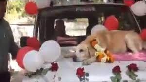 स्निफर डाग की हुई शाही विदाई, फूलों से सजी गाड़ी में बैठाकर किया गया विदा, 14 हजार रुपये मिलेगी पेंशन